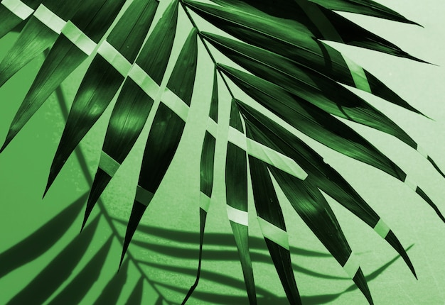 Folhas de samambaia tropical pintada monocromática Foto gratuita