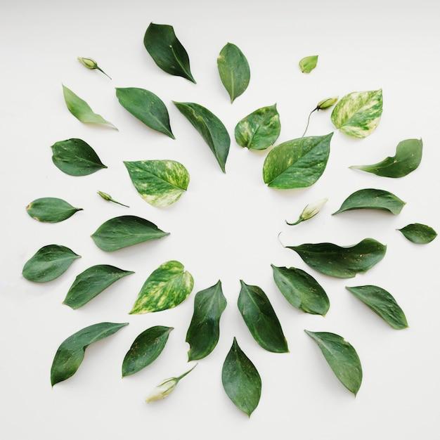 Folhas deitado em círculo Foto gratuita