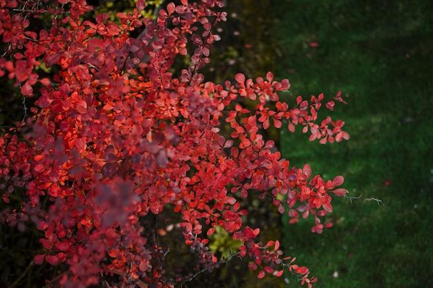 Folhas e espinhos Foto gratuita