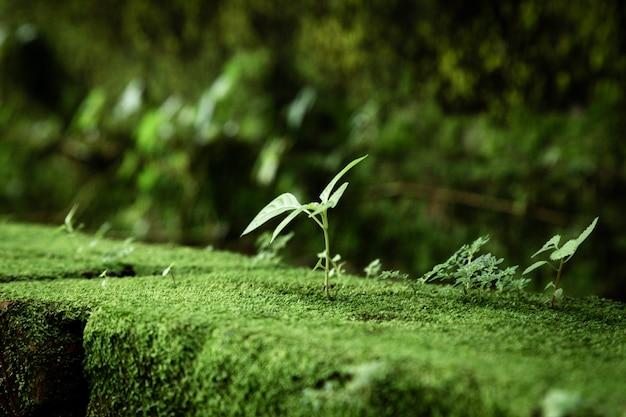 Folhas e musgo com fundo desfocado Foto gratuita