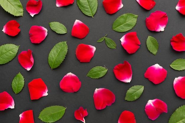 Folhas e pétalas de rosas de iceberg plana leigos Foto Premium