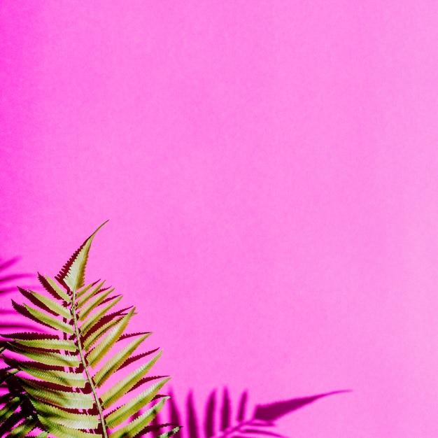 Folhas em fundo colorido Foto gratuita
