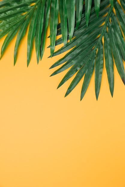 Folhas exuberantes em fundo amarelo Foto gratuita