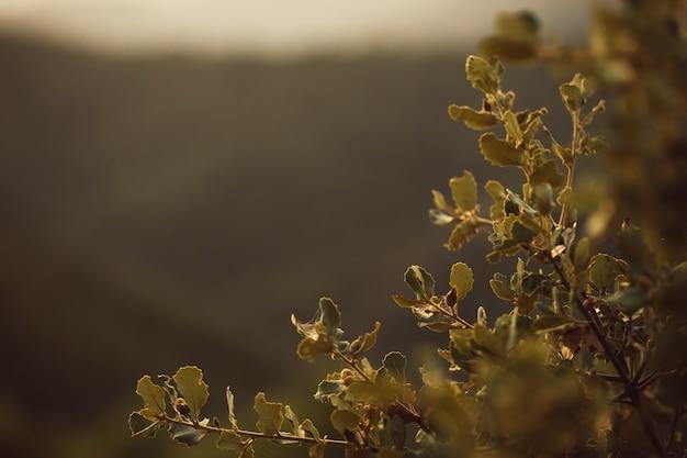 Folhas focadas com fundo de montanha Foto gratuita