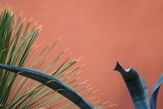 Folhas longas com espinho contra fundo colorido Foto gratuita