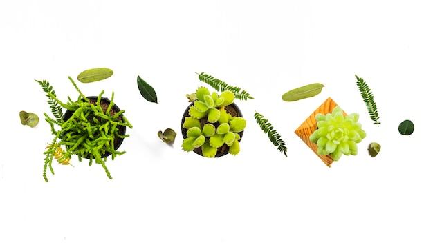 Folhas minúsculas e composição de suculentas Foto gratuita