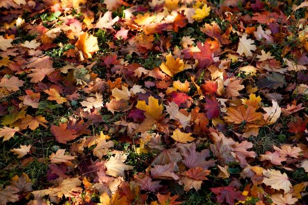 Folhas multicoloridas no outono no parque Foto Premium