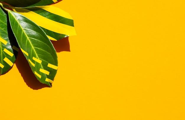 Folhas pintadas com fundo de espaço de cópia Foto gratuita