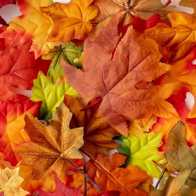 Folhas secas coloridas Foto gratuita
