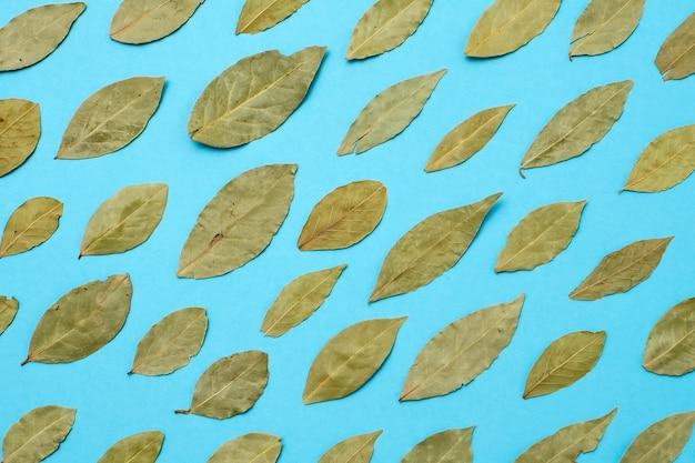 Folhas secas de louro sobre fundo azul Foto Premium