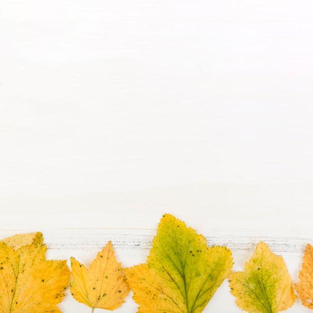 Folhas secas de outono close-up com espaço de cópia Foto gratuita