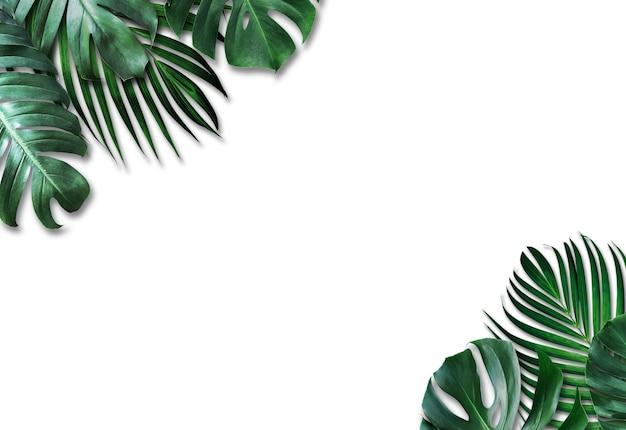 Folhas tropicais em fundo branco Foto Premium