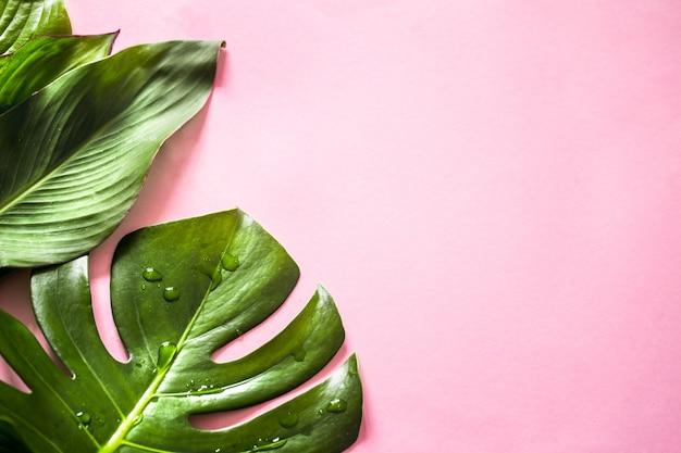 Folhas tropicais em um fundo colorido Foto gratuita