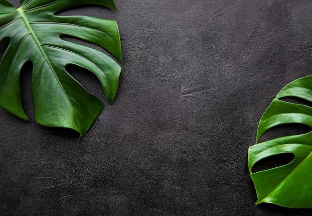 Folhas tropicais monstera Foto Premium