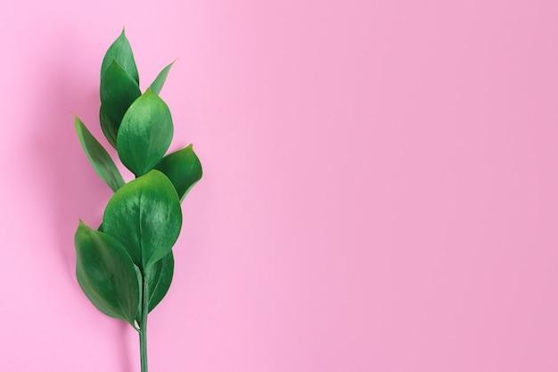 Folhas tropicais verdes em um rosa. natureza mínima na moda elegante Foto Premium