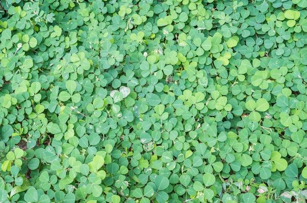 Folhas verdes closeup de planta no fundo de textura de jardim Foto Premium