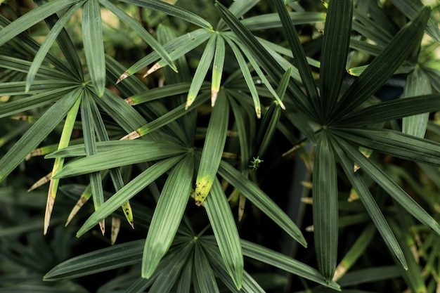 Folhas verdes com fundo Foto Premium