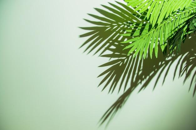 Folhas verdes com sombra no fundo colorido Foto gratuita
