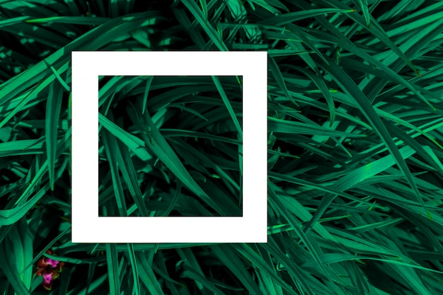Folhas verdes como pano de fundo e uma folha branca de papel para o rótulo. Foto Premium