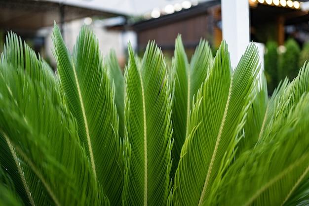 Folhas verdes de palmeira Foto gratuita
