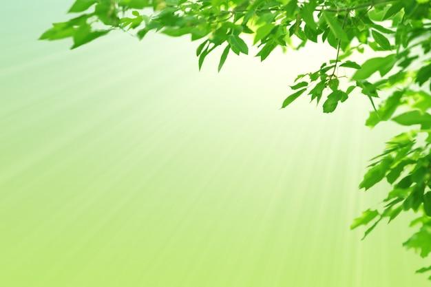 Folhas verdes e sol. fundo verde pastel da mola natural. copie o espaço. Foto Premium