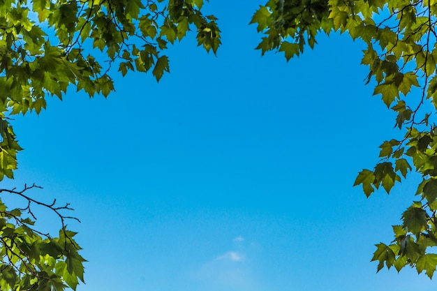 Folhas verdes e sol Foto gratuita