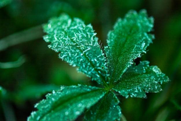 Folhas verdes em close-up Foto gratuita