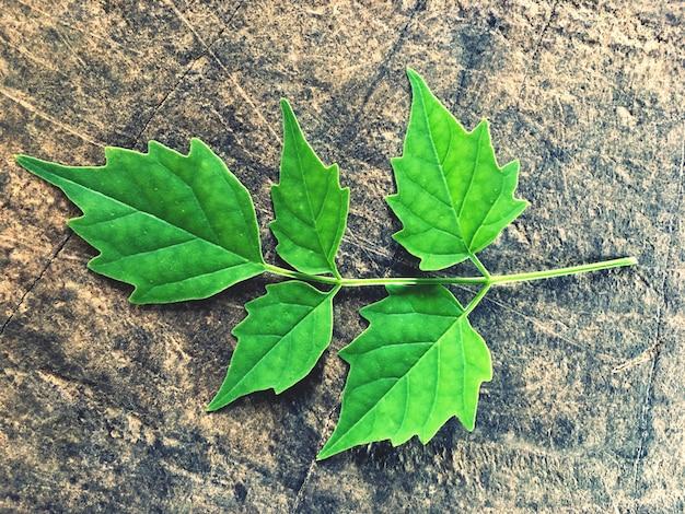 Folhas verdes em pisos de madeira velhos Foto Premium