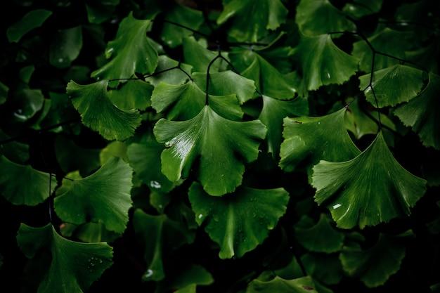 Folhas verdes fundo natural, textura de folhas, folhas Foto Premium