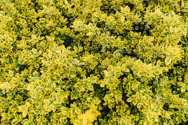 Folhas verdes naturais com textura Foto gratuita