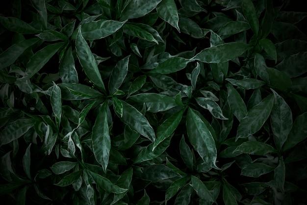 Folhas verdes textura de fundo natureza papel de parede Foto Premium