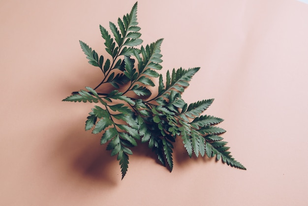 Folhas verdes tropicais Foto Premium