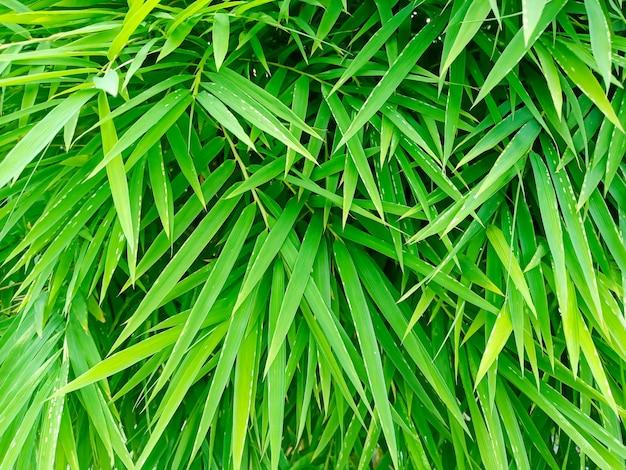 Folhas verdes vibrantes Foto Premium