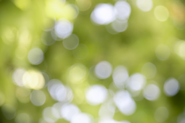 Fora de foco e fundo desfocado das hortaliças sob a luz solar com paisagem natural de plantas de bokeh e cópia espaço fundo, Foto Premium