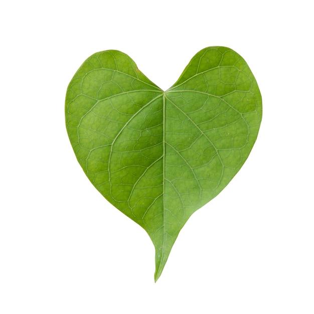 Forma do coração da folha verde isolada no fundo branco Foto gratuita