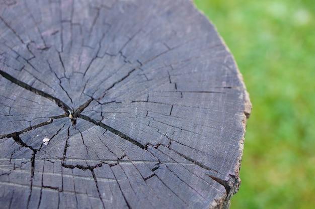 Foto aproximada de um toco de árvore Foto gratuita