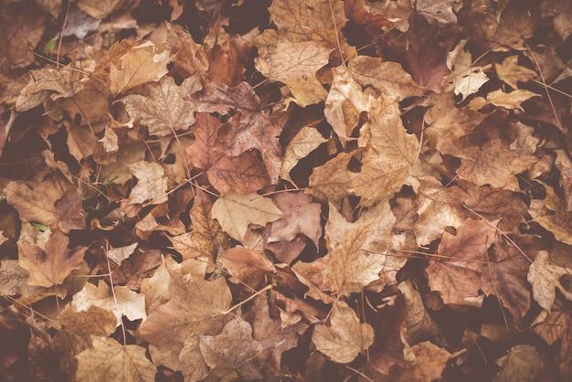 Foto de alto ângulo de folhas secas no chão no outono Foto gratuita