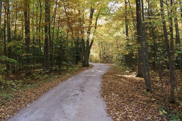Foto de alto ângulo de um caminho na floresta com folhas caídas no chão no outono Foto gratuita