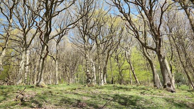 Foto de baixo ângulo de árvores nuas durante a primavera em um dia ensolarado Foto gratuita