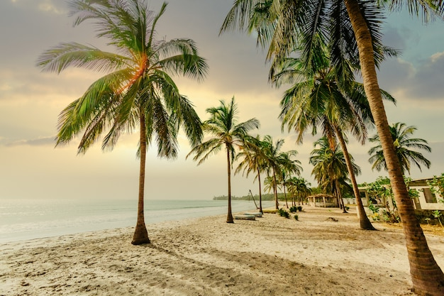 Foto de baixo ângulo de palmeiras em uma praia de areia perto de um oceano sob um céu azul ao pôr do sol Foto gratuita