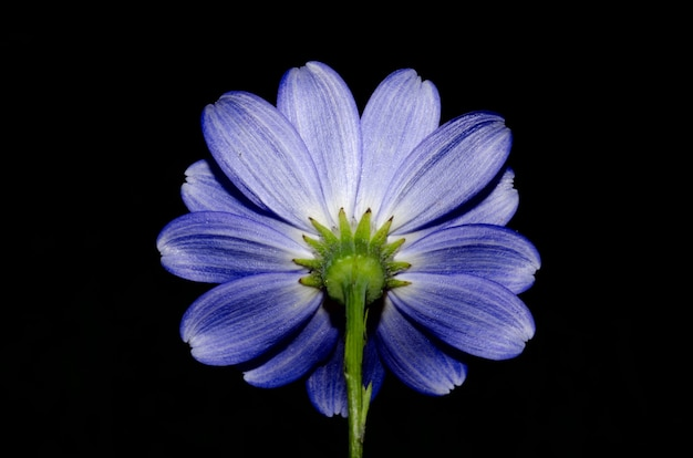Foto de baixo ângulo de uma linda flor roxa isolada no preto Foto gratuita