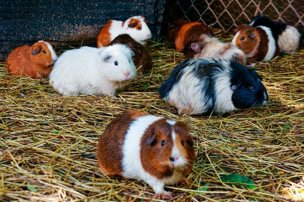 Foto de foco seletivo de hamsters caminhando no chão Foto gratuita