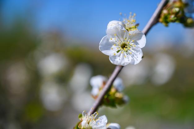 Foto de foco seletivo de lindas flores brancas em um galho no meio de um jardim Foto gratuita