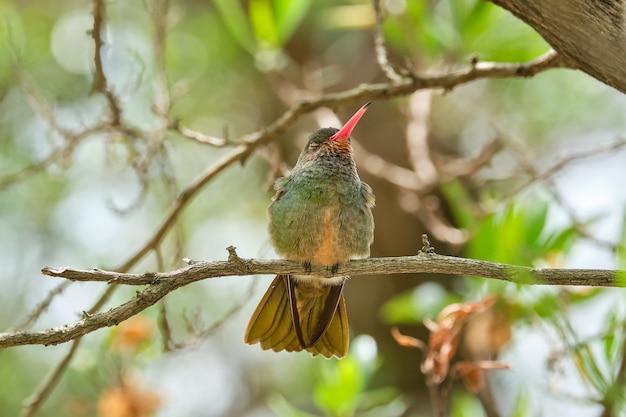 Foto de foco seletivo de um pássaro exótico sentado em um galho de árvore Foto gratuita