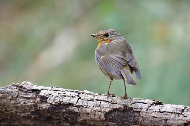 Foto de foco seletivo de um pássaro exótico sentado no galho grosso de uma árvore Foto gratuita