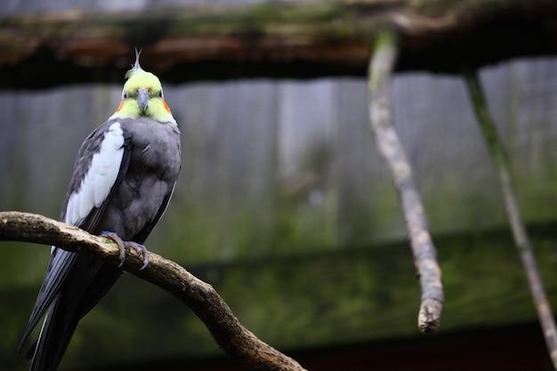 Foto de foco seletivo de um periquito em um galho Foto gratuita