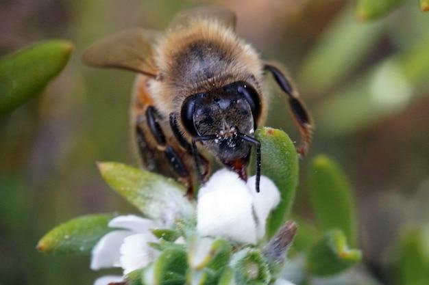 Foto de foco seletivo de uma abelha sentada em uma flor Foto gratuita
