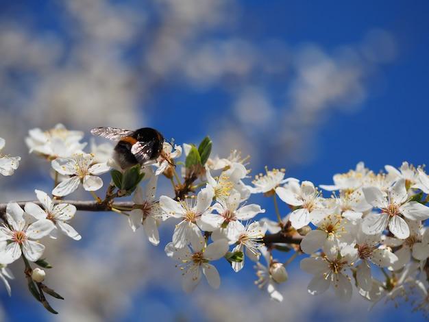 Foto de foco seletivo de uma bela árvore florescendo sob um céu claro Foto gratuita
