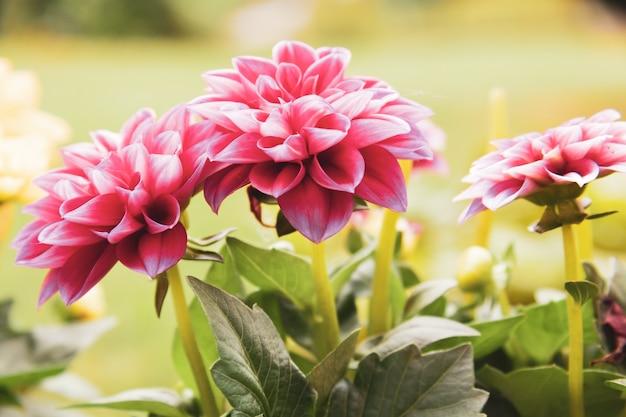 Foto de foco seletivo de uma flor rosa desabrochando Foto gratuita