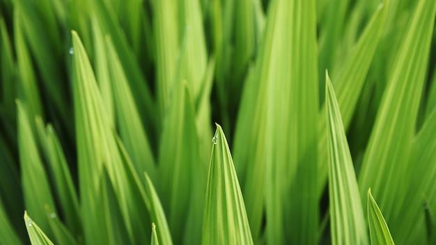 Foto de foco seletivo de uma folha de grama com orvalho matinal Foto gratuita